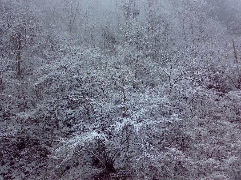 雪が降り出す