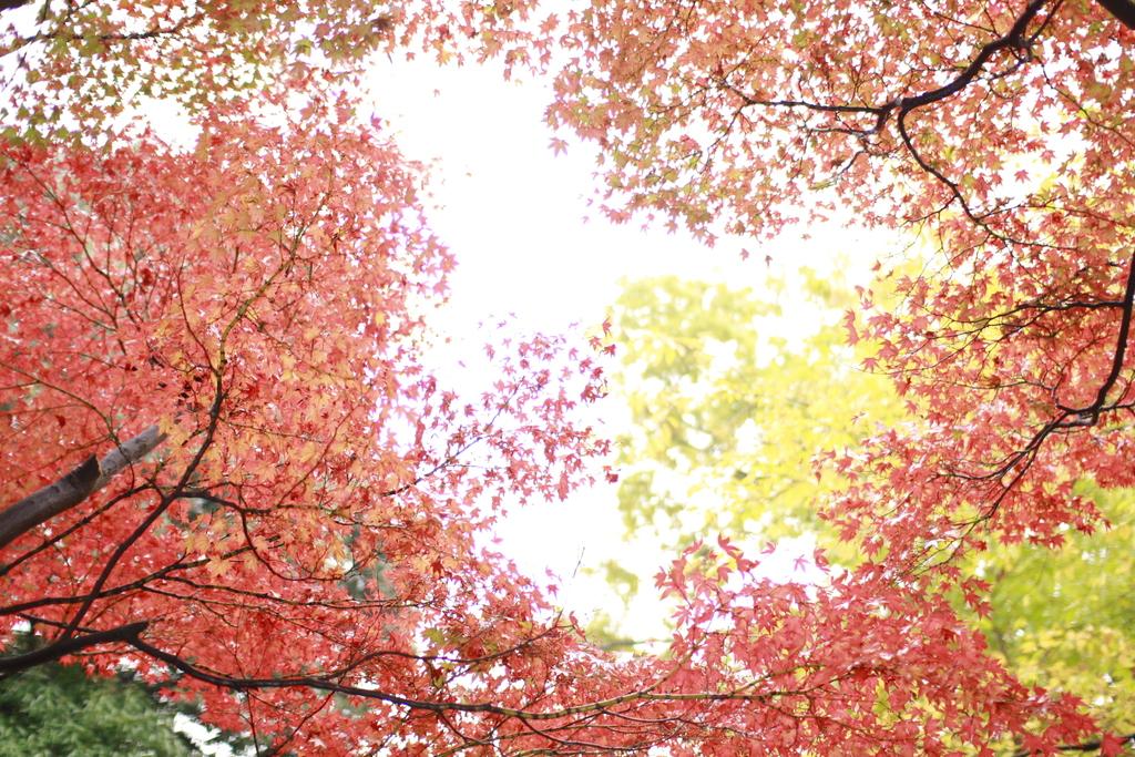 秋ではない感じ
