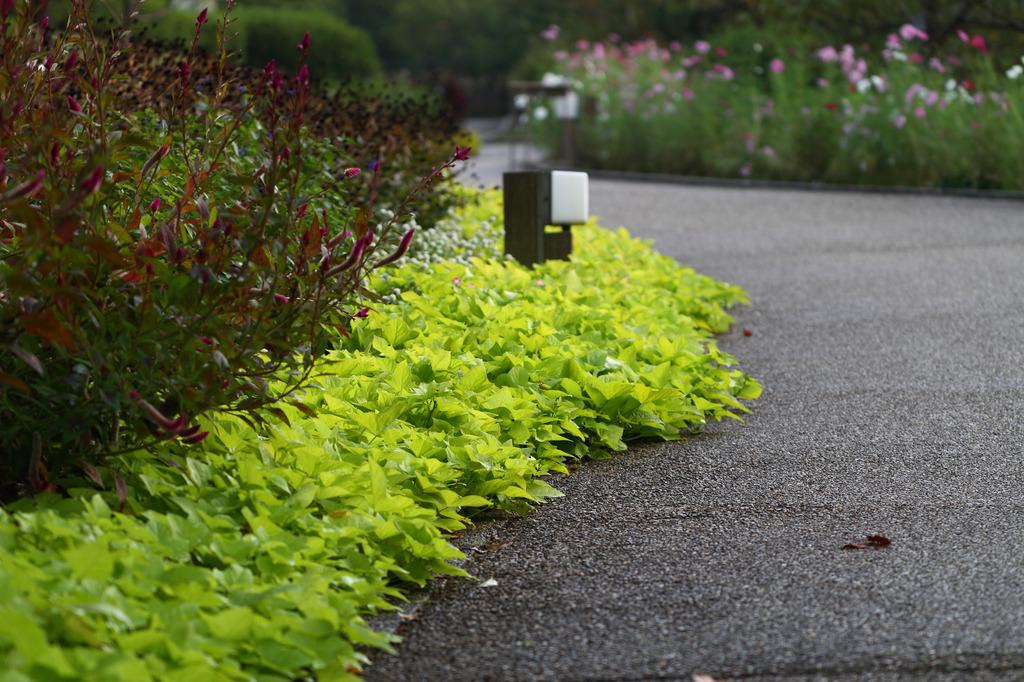 宇治植物公園
