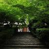 新緑と石階段