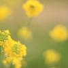 柳津yellow