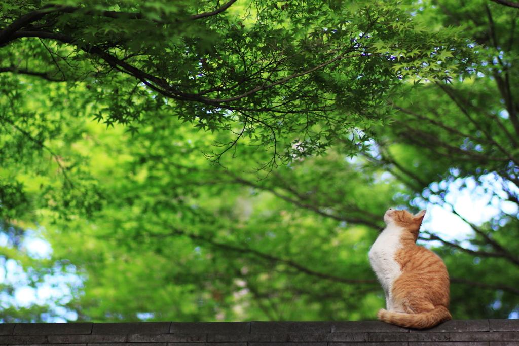 新緑の中 見上げて猫は 何思ふ