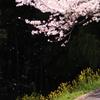桜 舞い散る