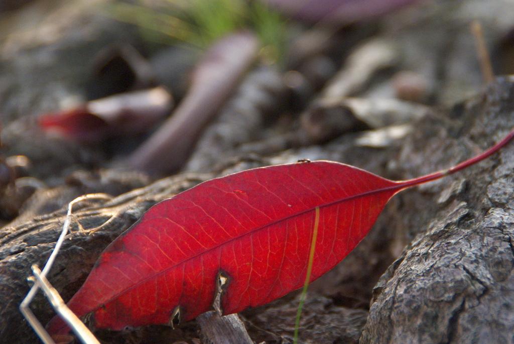 アリの紅葉狩り