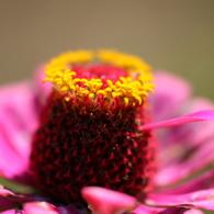 CANON Canon EOS 50Dで撮影した植物(090920-0007)の写真(画像)