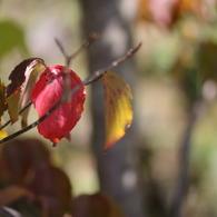 CANON Canon EOS 50Dで撮影した植物(090920-0002)の写真(画像)