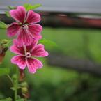 CANON Canon EOS 5Dで撮影した植物(201006300005)の写真(画像)