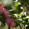 CANON Canon EOS 50Dで撮影した植物(090920-0017)の写真(画像)