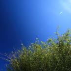 CANON Canon EOS Kiss Digital Xで撮影した風景(090920-0008)の写真(画像)