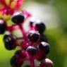 CANON Canon EOS 50Dで撮影した植物(090920-0015)の写真(画像)