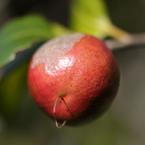 CANON Canon EOS 50Dで撮影した植物(090920-0011)の写真(画像)
