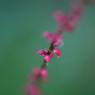 CANON Canon EOS 50Dで撮影した植物(090920-0031)の写真(画像)