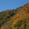 面河渓 紅葉