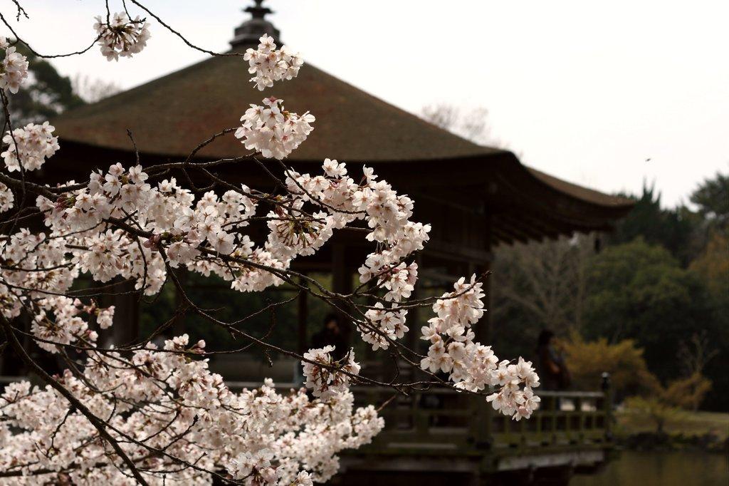 桜~浮御堂~