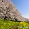 桜堤公園②