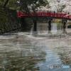 花筏①(弘前公園)