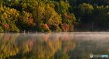 水面に浮かぶ紅葉と霧