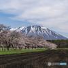 小岩井の春