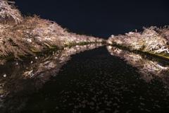 桜 弘前公園 夜①