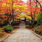 NIKON E8800で撮影した風景(常寂光寺)の写真(画像)