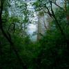 静かな森の奥深く