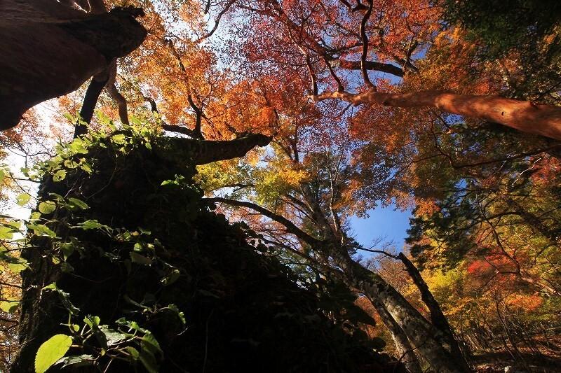 09-10-28 原生林