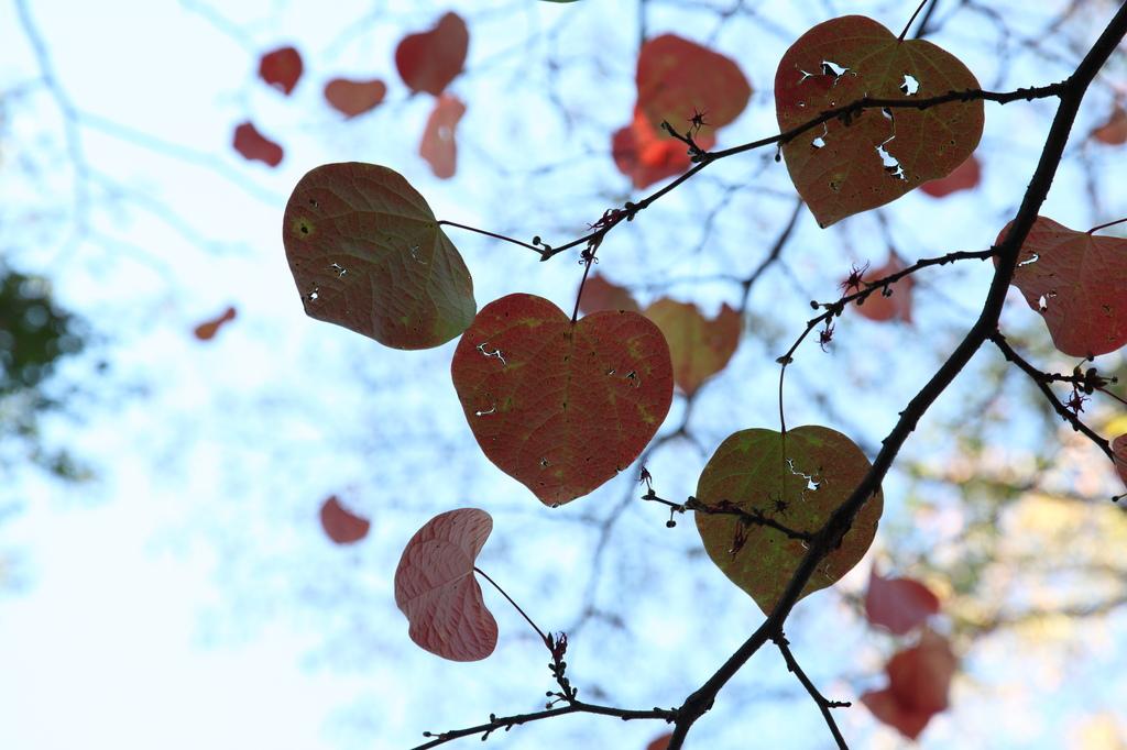 人は、失恋の数だけ強くなれるのかな・・・