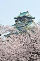 桜 大阪城