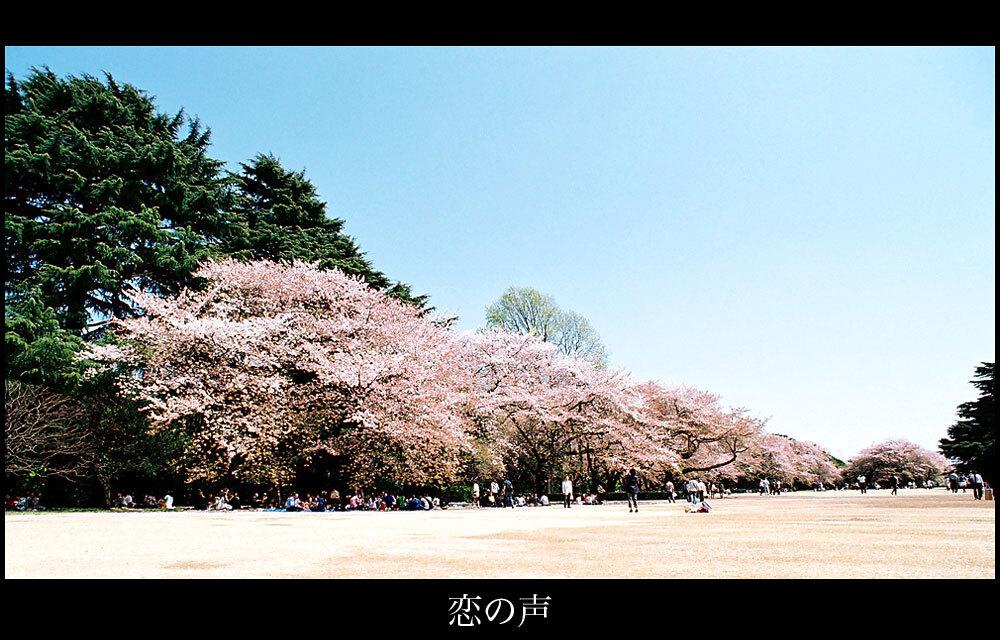 桜が散った日前の日