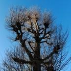 CASIO EX-FH25で撮影した植物(CIMG1553)の写真(画像)