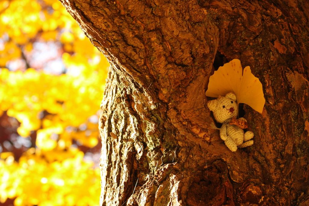森のクマさん(イチョウ付)