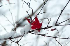 落ち忘れた秋