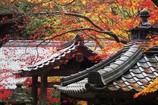 秋色の山寺
