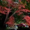 赤い車と紅葉