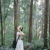 ある日の森の中
