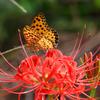 蝶をサポート 花のリレー