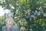 しゃぼん玉と秋日和