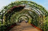 Welcome to Rose Garden