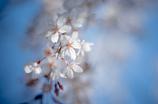 春なのね。
