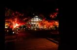 永観堂の夜