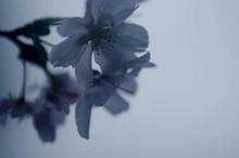十月に咲く。。。