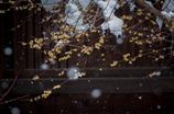 雪と梅。。。。