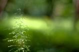 草むらのツリー
