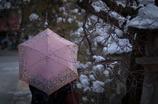 雪と梅。。。。。