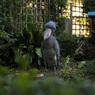 上野動物園#44