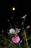 中秋の月見