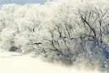 霧氷に飛ぶ