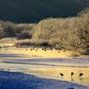 音羽橋冬景色