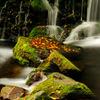 Autumn stream...