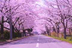 Sakura color...